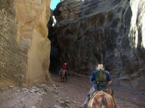 Horseback riding into Willis Creek